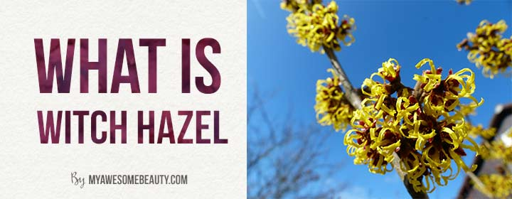 what is witch hazel