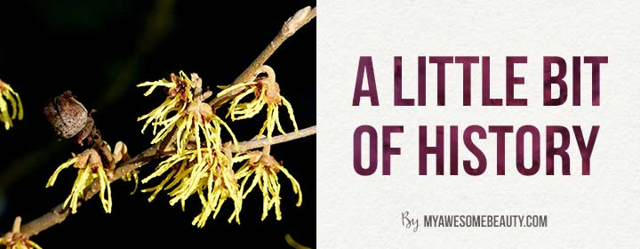 witch hazel history