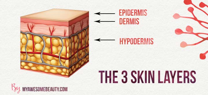The 3 skin layers