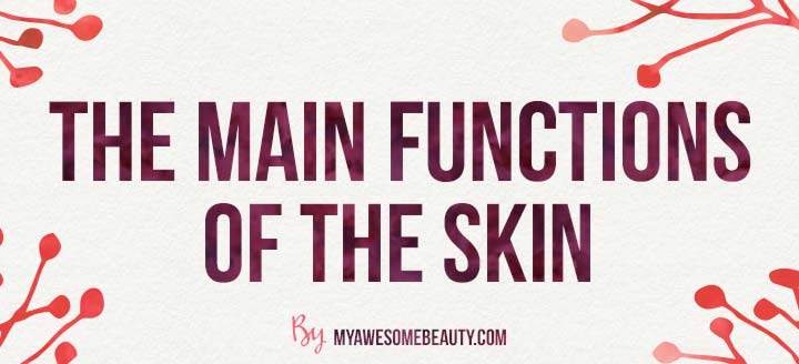 the main functions of the skin